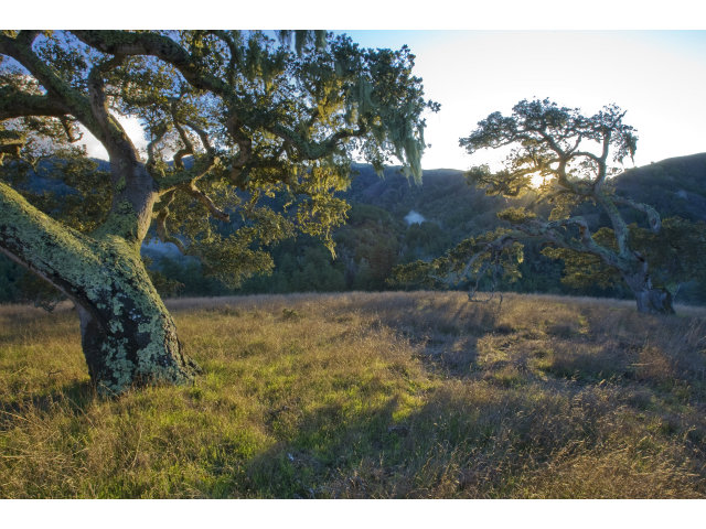 Real Estate for Sale, ListingId: 29307492, Carmel,CA93923